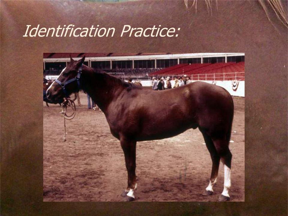 Identification Practice: