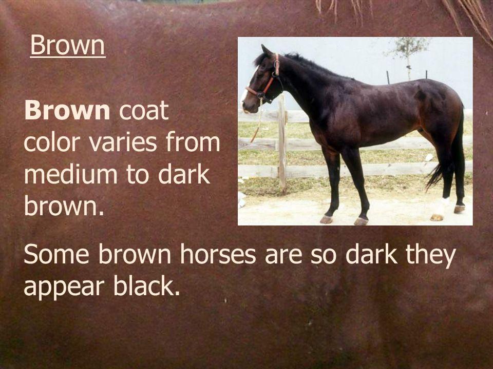 Brown Brown coat color varies from medium to dark brown.