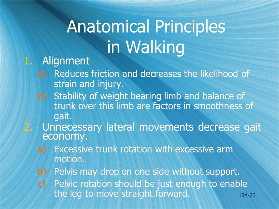 18A-21 Anatomical Principles in Walking 3.Normal flexibility of the joints reduces resistance.