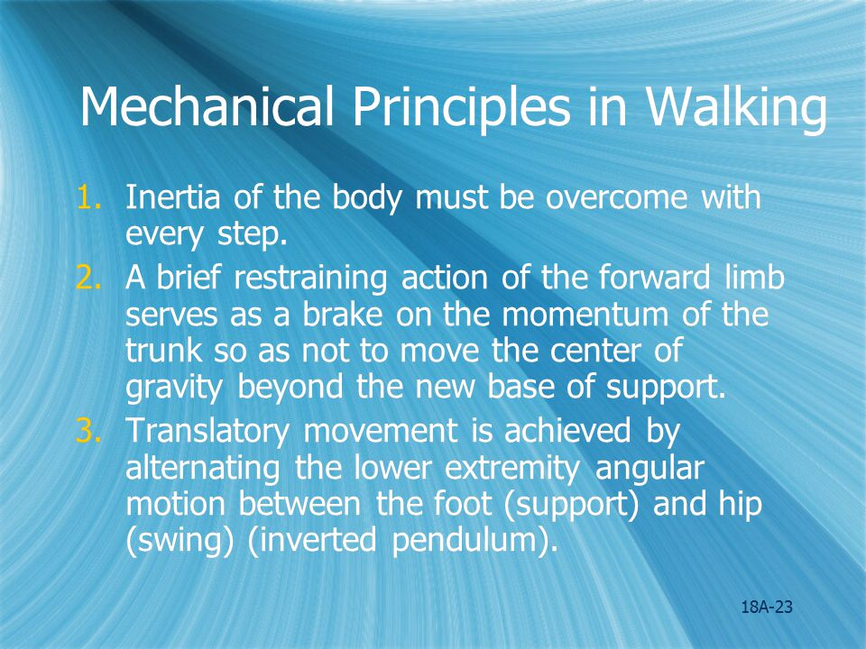 18A-24 Mechanical Principles in Walking 4.The vertical component of ground reaction force serves to counteract the pull of gravity.
