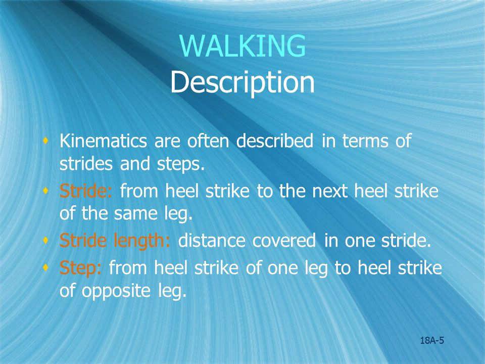 18A-6 WALKING Description  Chief sources of motion in the swing phase are gravity & momentum; ballistic movement  Sources of motion for support phase:  1 st Half: momentum of forward moving trunk.
