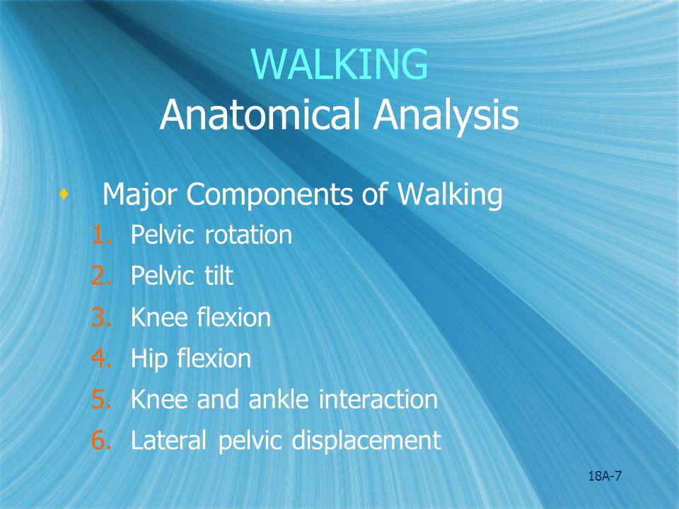 18A-8 WALKING Anatomical Analysis Figure 18.2