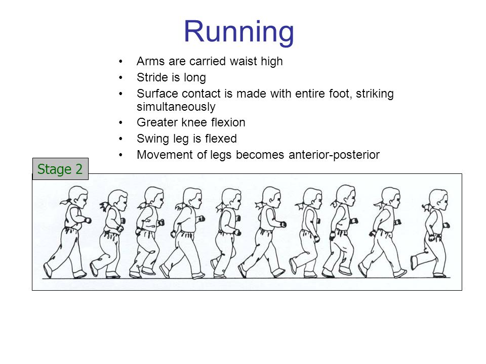 Running Arms are carried waist high Stride is long Surface contact is made with entire foot, striking simultaneously Greater knee flexion Swing leg is flexed Movement of legs becomes anterior-posterior Stage 2