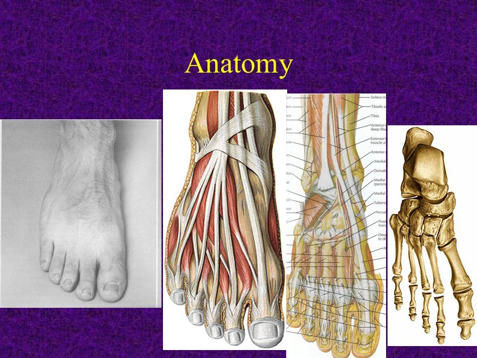 SPECIAL PATHOLOGIES: -PLANTAR FASCIITIS: ~Any tightness of Achilles tendon.