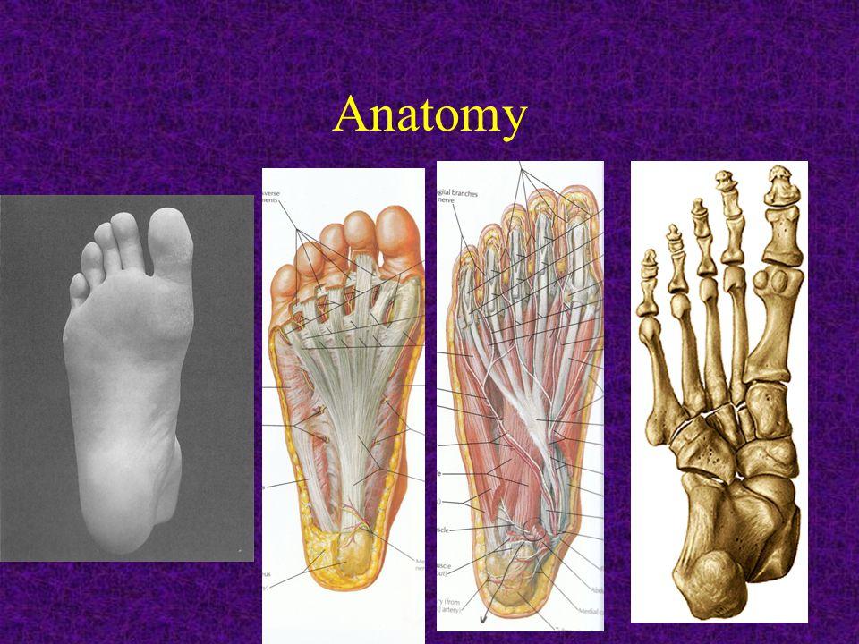 Anatomical landmarks: -Medial malleolus, lateral malleolus, Achilles tendon, calcaneal tuberosity, peroneal tendon, tibialis posterior tendon, tibialis anterior tendon, plantar fascia, base of 5th metatarsal, 1st MP joint, metatarsal heads……..etc
