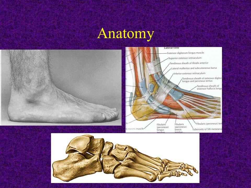 MOVEMENTS: Ankle: -dorsiflection -plantar flection.