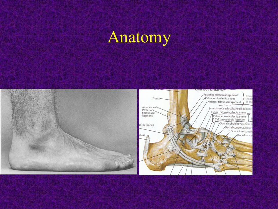 History Onset Duration Mechanism Swelling / Ecchymosis Ambulation Hx of previous injury