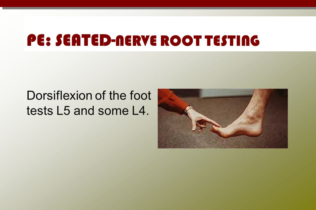 PE: SEATED- NERVE ROOT TESTING Dorsiflexion of the foot tests L5 and some L4.