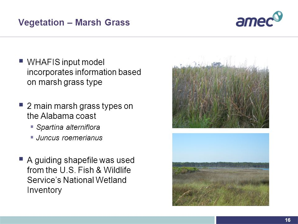16 Vegetation – Marsh Grass  WHAFIS input model incorporates information based on marsh grass type  2 main marsh grass types on the Alabama coast  Spartina alterniflora  Juncus roemerianus  A guiding shapefile was used from the U.S.