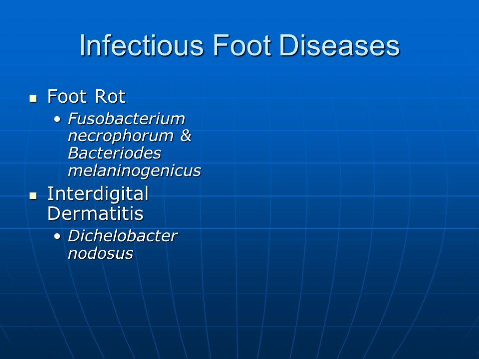 Infectious Foot Diseases Foot Rot Foot Rot Fusobacterium necrophorum & Bacteriodes melaninogenicusFusobacterium necrophorum & Bacteriodes melaninogenicus Interdigital Dermatitis Interdigital Dermatitis Dichelobacter nodosusDichelobacter nodosus