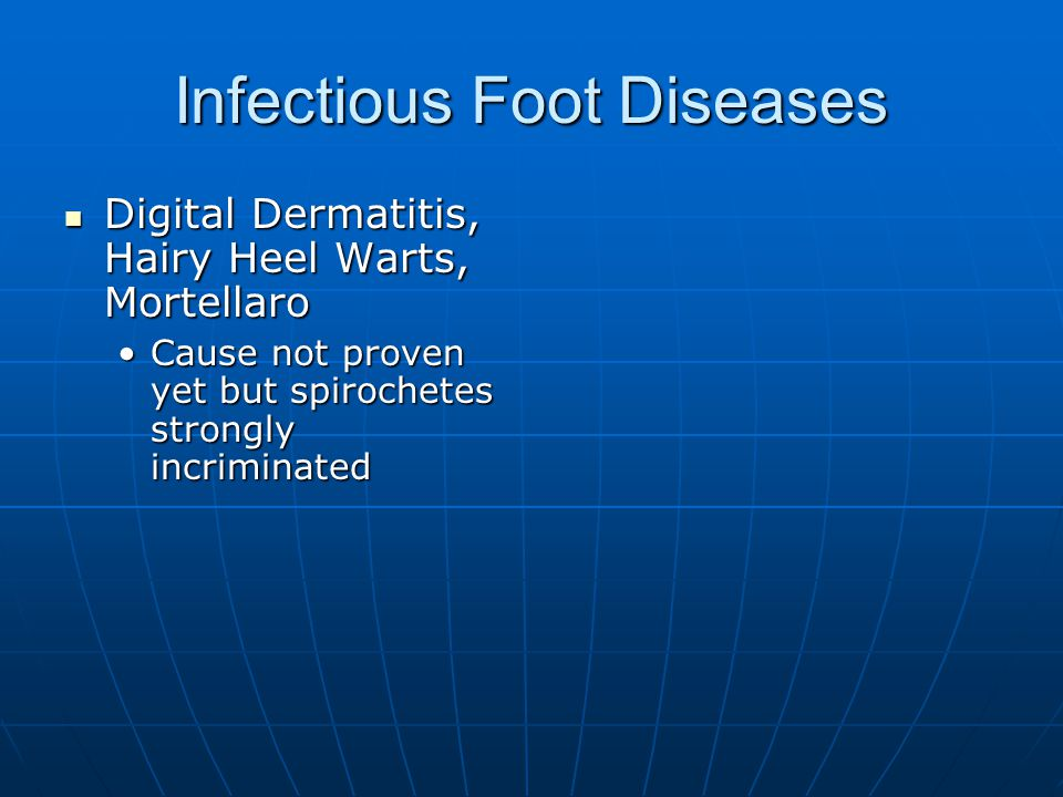Infectious Foot Diseases Digital Dermatitis, Hairy Heel Warts, Mortellaro Digital Dermatitis, Hairy Heel Warts, Mortellaro Cause not proven yet but spirochetes strongly incriminatedCause not proven yet but spirochetes strongly incriminated