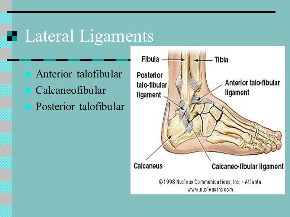 Lateral Ligaments Anterior talofibular Calcaneofibular Posterior talofibular