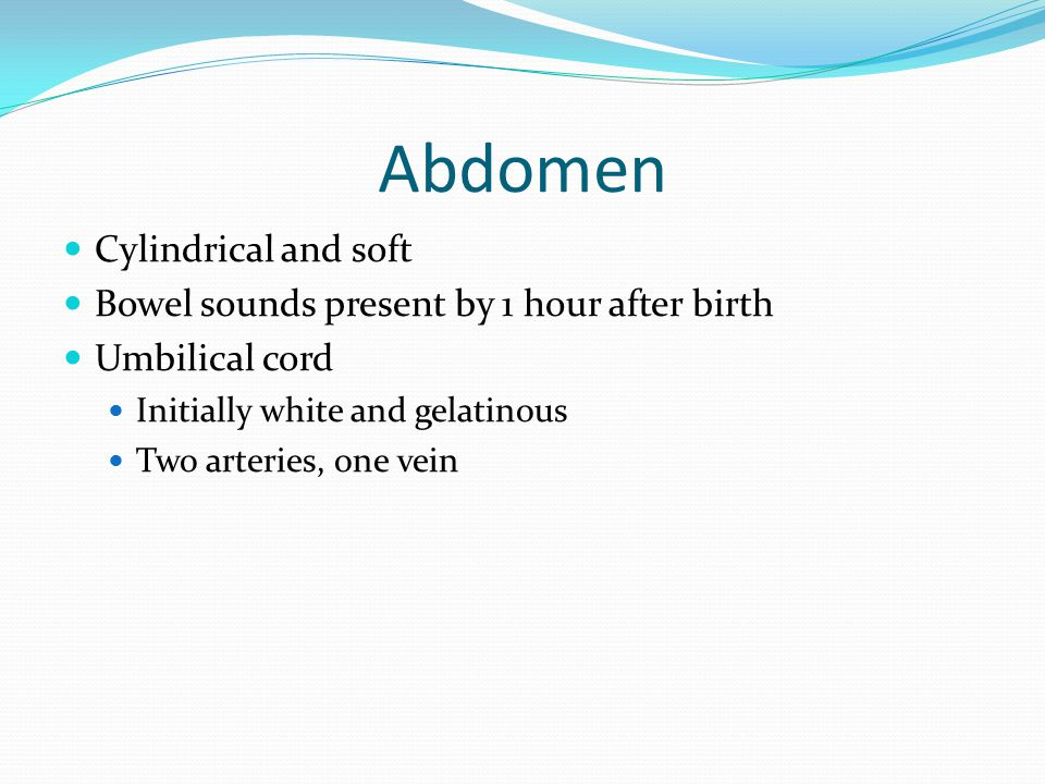 Abdomen Cylindrical and soft Bowel sounds present by 1 hour after birth Umbilical cord Initially white and gelatinous Two arteries, one vein