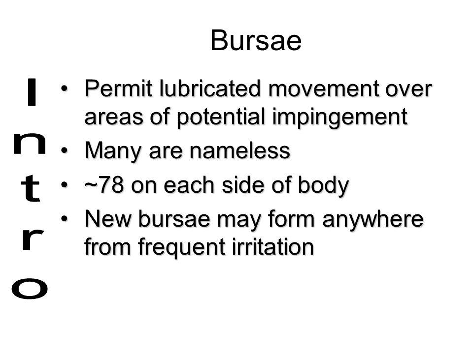 Bursae Permit lubricated movement over areas of potential impingementPermit lubricated movement over areas of potential impingement Many are namelessM