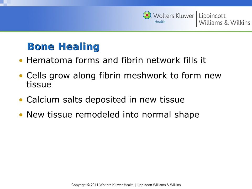 Copyright © 2011 Wolters Kluwer Health | Lippincott Williams & Wilkins Bone Healing Hematoma forms and fibrin network fills it Cells grow along fibrin meshwork to form new tissue Calcium salts deposited in new tissue New tissue remodeled into normal shape