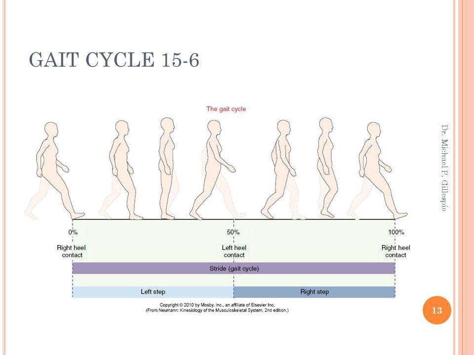GAIT CYCLE 15-6 13 Dr. Michael P. Gillespie