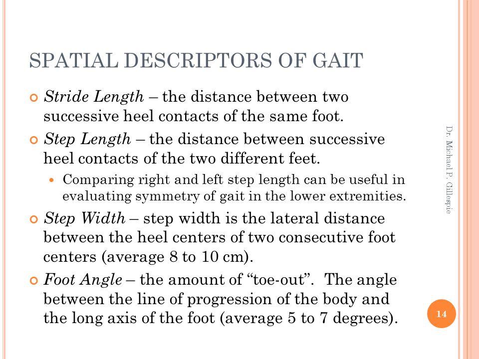 SPATIAL DESCRIPTORS OF GAIT Stride Length – the distance between two successive heel contacts of the same foot. Step Length – the distance between suc