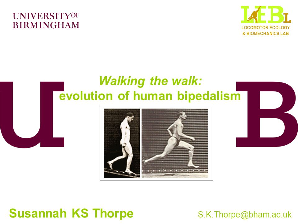 Walking the walk: evolution of human bipedalism Susannah KS Thorpe S.K.Thorpe@bham.ac.uk LOCOMOTOR ECOLOGY & BIOMECHANICS LAB