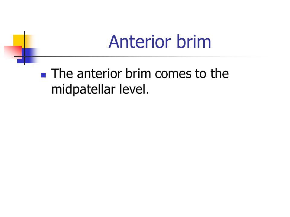 Anterior brim The anterior brim comes to the midpatellar level.