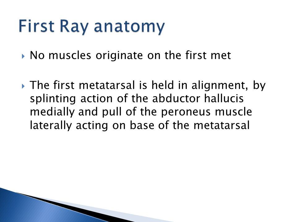  No muscles originate on the first met  The first metatarsal is held in alignment, by splinting action of the abductor hallucis medially and pull of the peroneus muscle laterally acting on base of the metatarsal