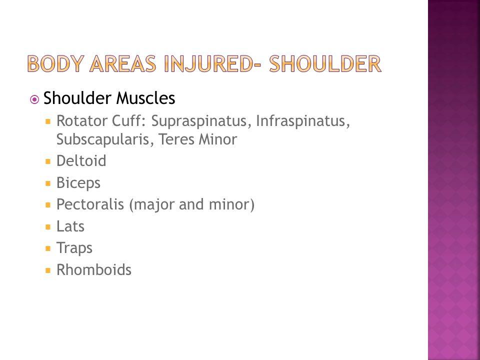  Shoulder Muscles  Rotator Cuff: Supraspinatus, Infraspinatus, Subscapularis, Teres Minor  Deltoid  Biceps  Pectoralis (major and minor)  Lats  Traps  Rhomboids