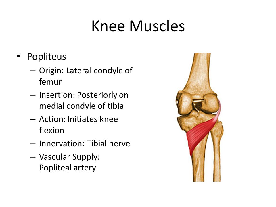 Knee Muscles Popliteus – Origin: Lateral condyle of femur – Insertion: Posteriorly on medial condyle of tibia – Action: Initiates knee flexion – Inner