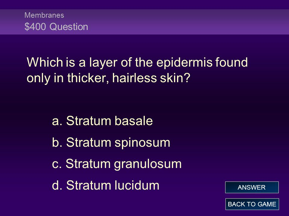 Membranes $400 Question Which is a layer of the epidermis found only in thicker, hairless skin.