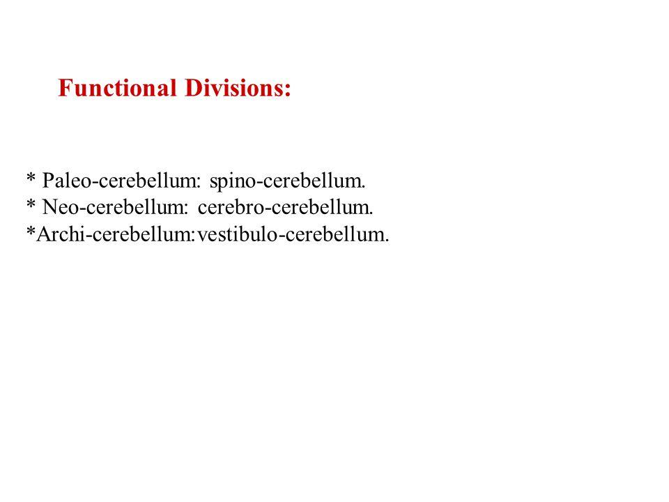 Functional Divisions: * Paleo-cerebellum: spino-cerebellum.