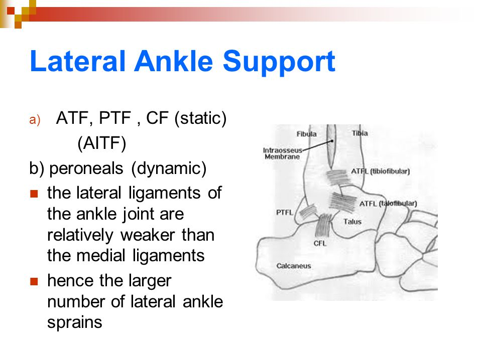 Lateral Ankle Support a) ATF, PTF, CF (static) (AITF) b) peroneals (dynamic) the lateral ligaments of the ankle joint are relatively weaker than the m