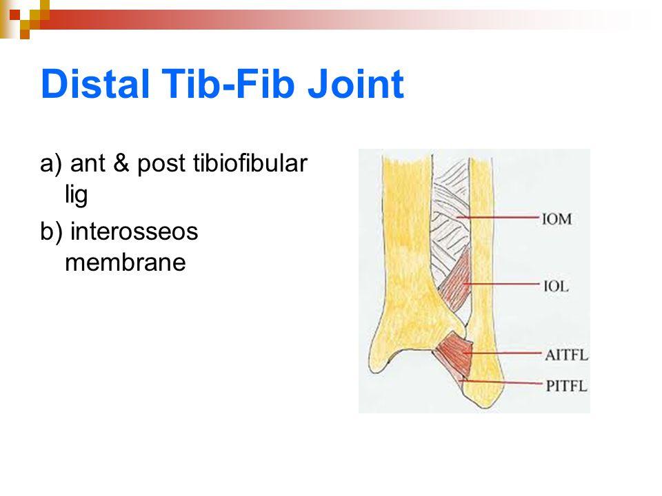 Distal Tib-Fib Joint a) ant & post tibiofibular lig b) interosseos membrane