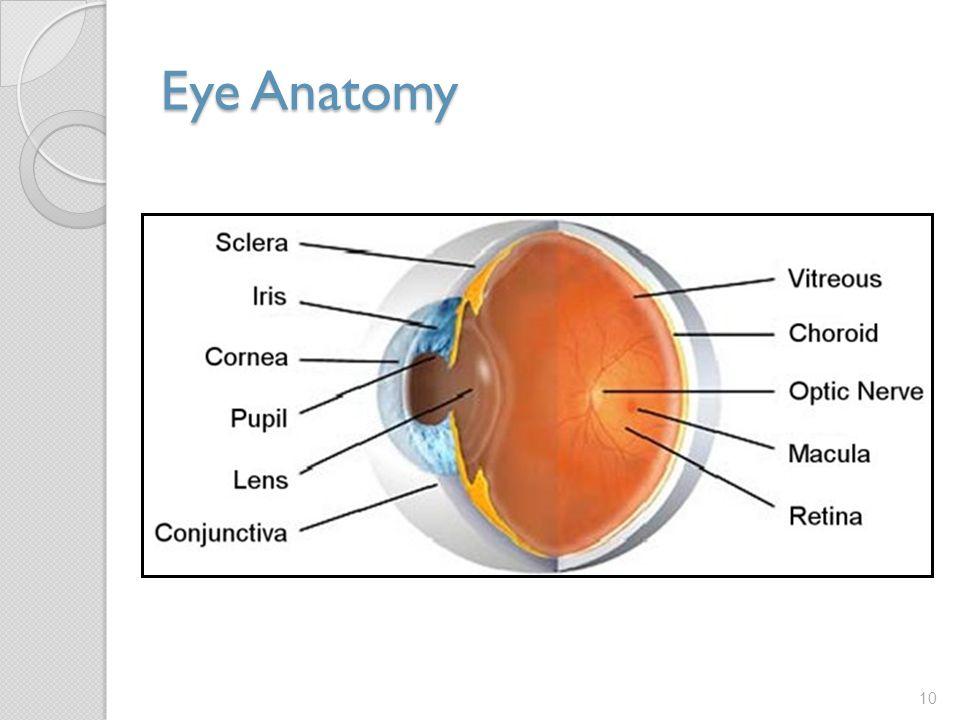 Eye Anatomy 10