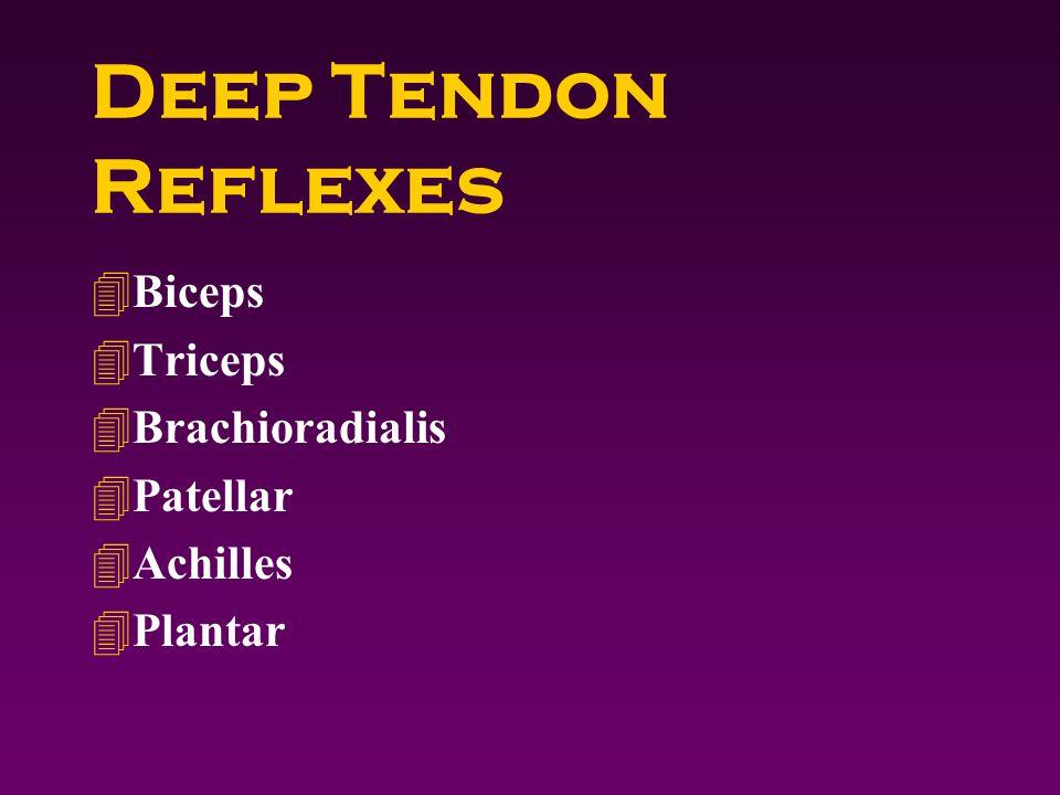 Deep Tendon Reflexes 4Biceps 4Triceps 4Brachioradialis 4Patellar 4Achilles 4Plantar
