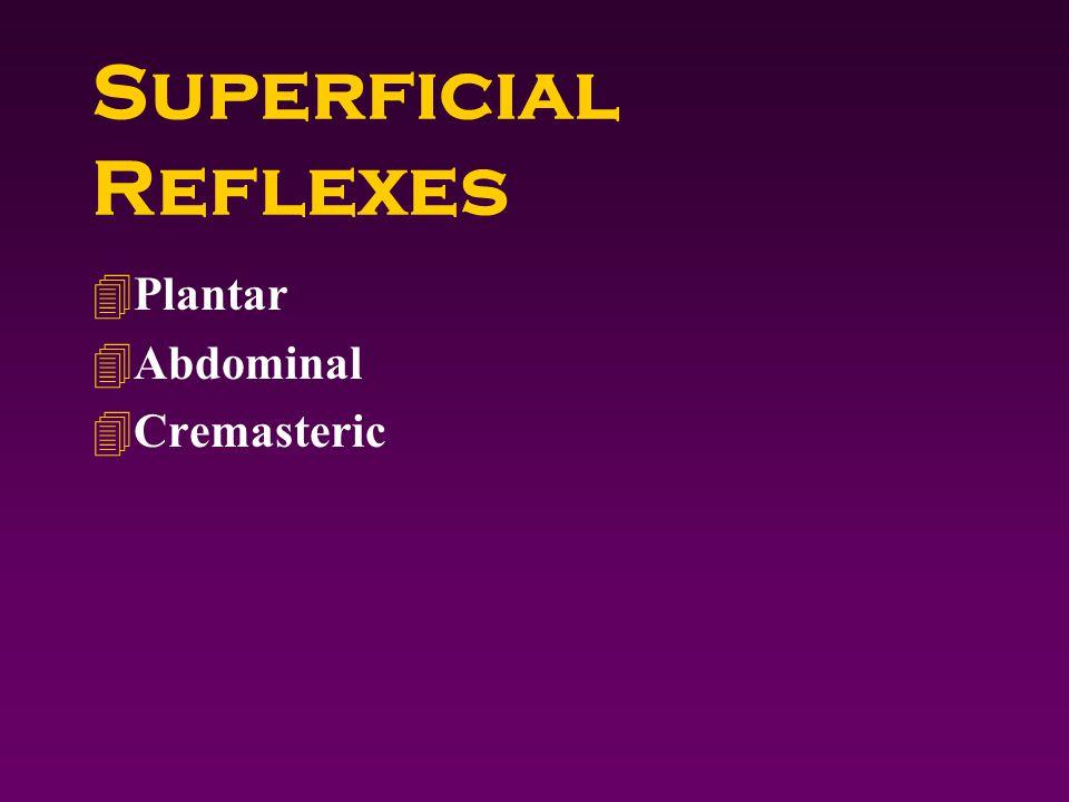 Superficial Reflexes 4Plantar 4Abdominal 4Cremasteric