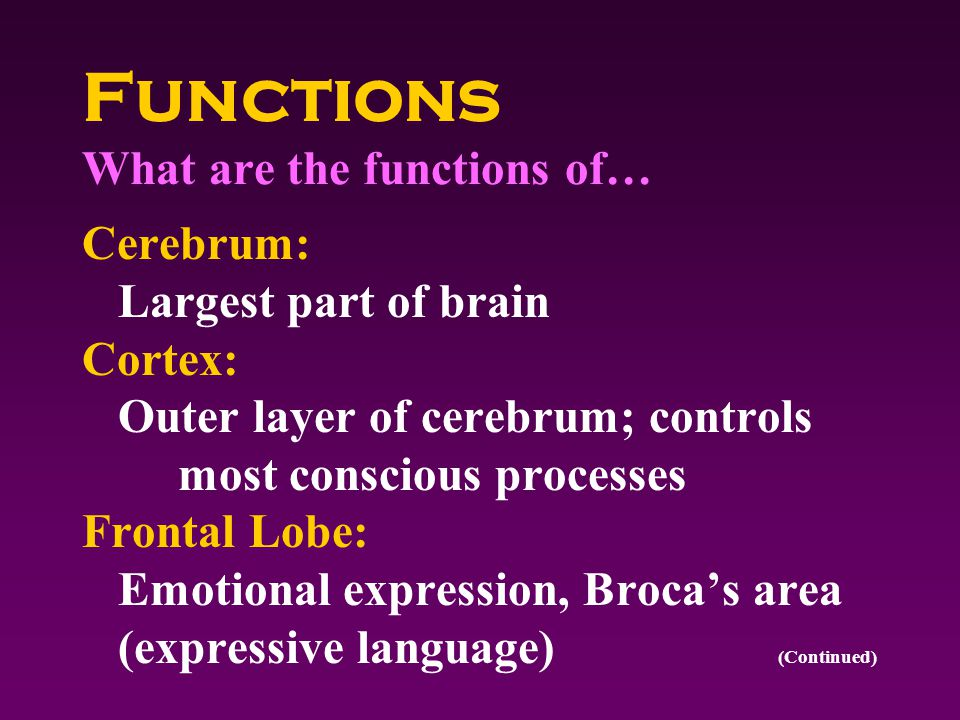 Functions What are the functions of… Cerebrum: Largest part of brain Cortex: Outer layer of cerebrum; controls most conscious processes Frontal Lobe: Emotional expression, Broca's area (expressive language) (Continued)