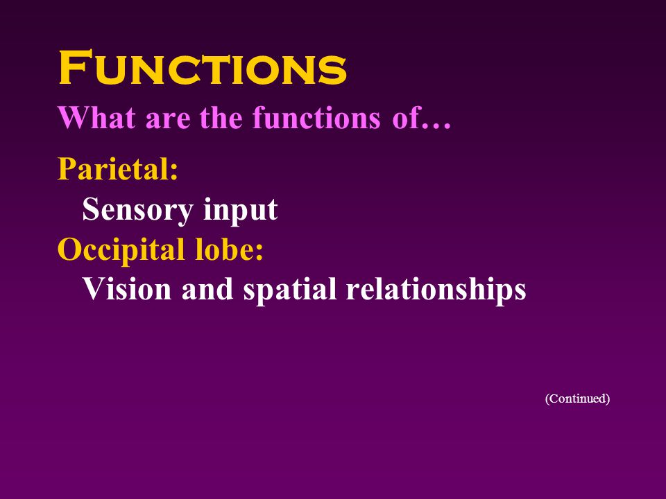 Functions What are the functions of… Parietal: Sensory input Occipital lobe: Vision and spatial relationships (Continued)