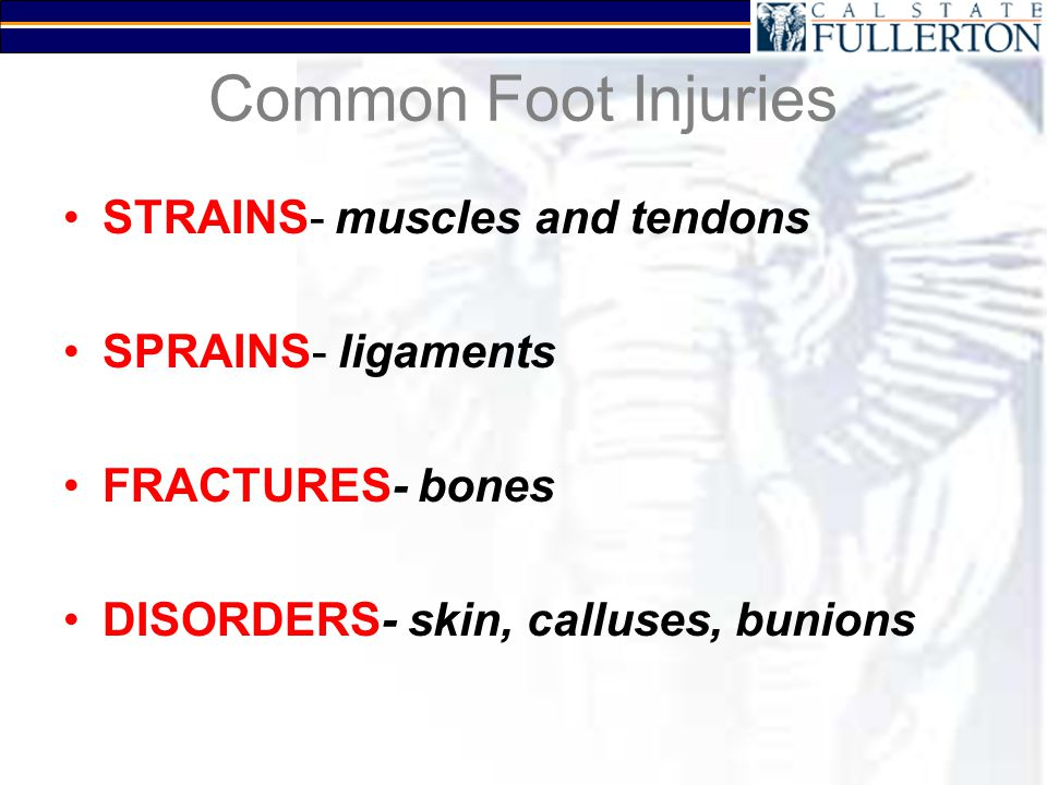 Common Foot Injuries STRAINS- muscles and tendons SPRAINS- ligaments FRACTURES- bones DISORDERS- skin, calluses, bunions