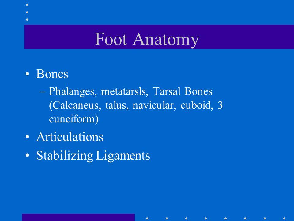 Foot Anatomy Bones –Phalanges, metatarsls, Tarsal Bones (Calcaneus, talus, navicular, cuboid, 3 cuneiform) Articulations Stabilizing Ligaments