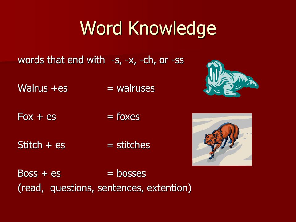 Word Knowledge words that end with -s, -x, -ch, or -ss Walrus +es= walruses Fox + es= foxes Stitch + es= stitches Boss + es= bosses (read, questions, sentences, extention)