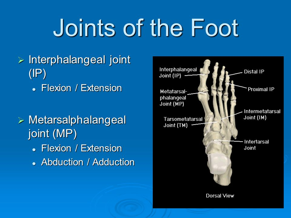 Joints of the Foot  Interphalangeal joint (IP) Flexion / Extension Flexion / Extension  Metarsalphalangeal joint (MP) Flexion / Extension Flexion /