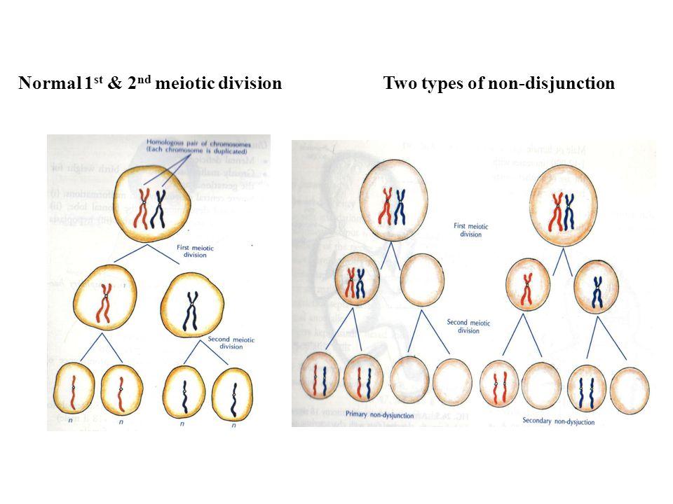 Trisomies of Chromosomes Presence of 3 copies of a chromosome Trisomy of Autosomes (13,18,21) Trisomy of Sex Chromosomes (XXX, XXY)
