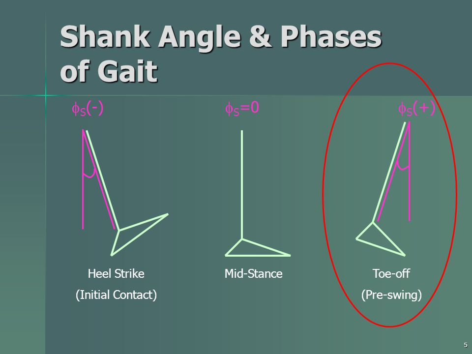 5 Shank Angle & Phases of Gait Heel Strike (Initial Contact) Mid-StanceToe-off (Pre-swing)  S =0  S (-)  S (+)