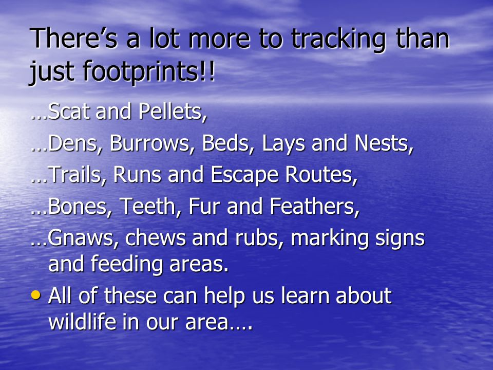 There's a lot more to tracking than just footprints!! …Scat and Pellets, …Dens, Burrows, Beds, Lays and Nests, …Trails, Runs and Escape Routes, …Bones