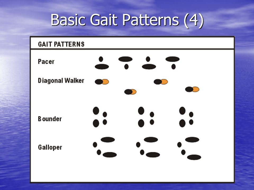 Basic Gait Patterns (4)