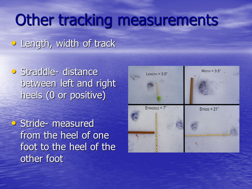 Other tracking measurements Length, width of track Length, width of track Straddle- distance between left and right heels (0 or positive) Straddle- distance between left and right heels (0 or positive) Stride- measured from the heel of one foot to the heel of the other foot Stride- measured from the heel of one foot to the heel of the other foot