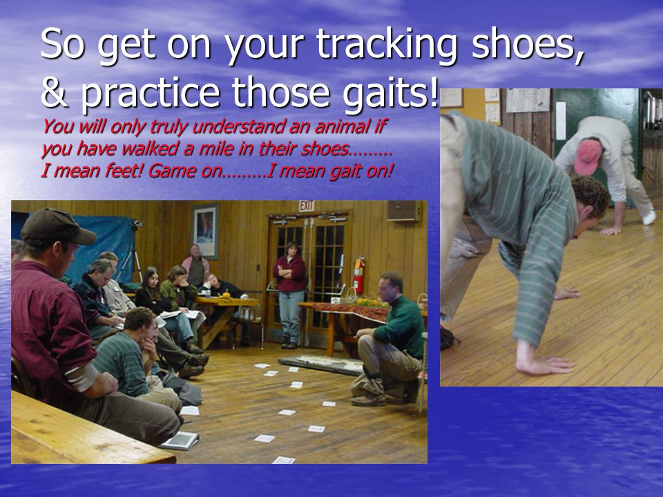 So get on your tracking shoes, & practice those gaits! You will only truly understand an animal if you have walked a mile in their shoes……… I mean fee