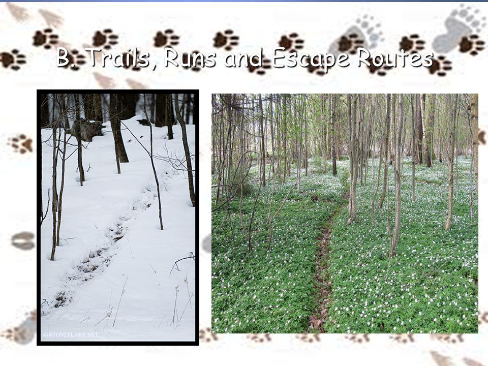 B. Trails, Runs and Escape Routes