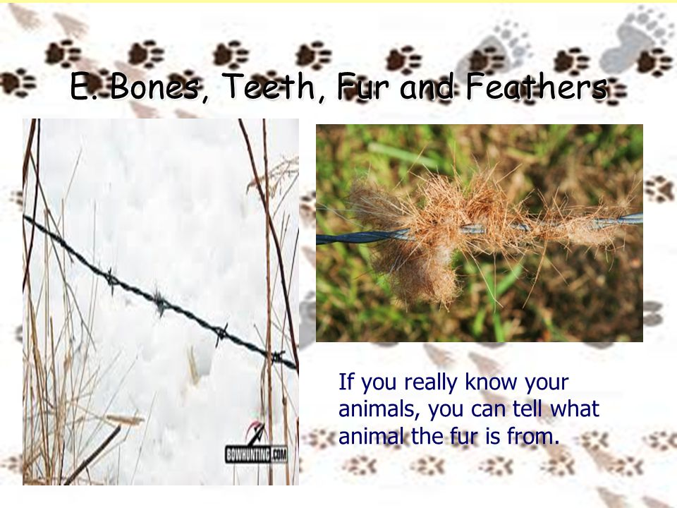 Bones, Teeth, Fur and Feathers E. Bones, Teeth, Fur and Feathers If you really know your animals, you can tell what animal the fur is from.