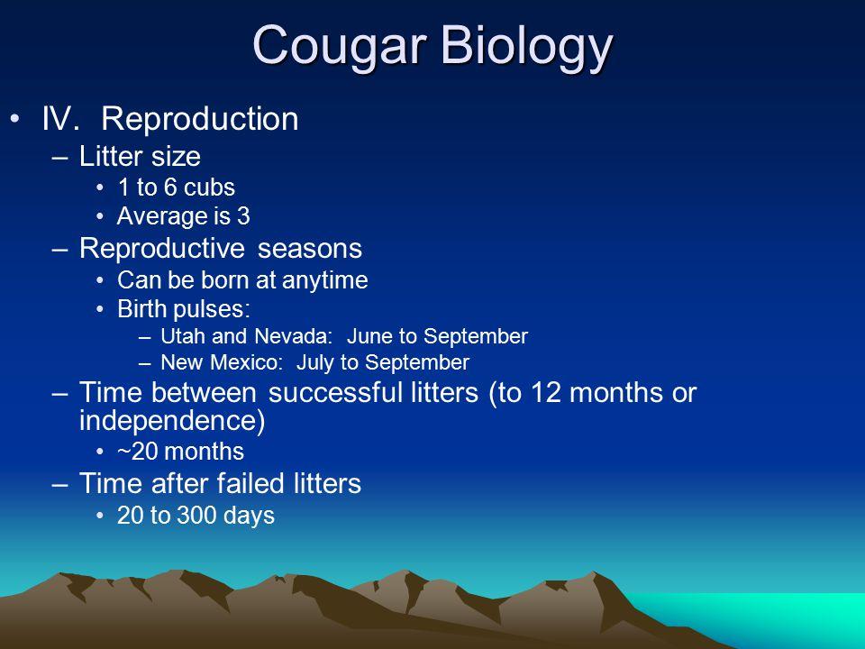 Cougar Biology IV.