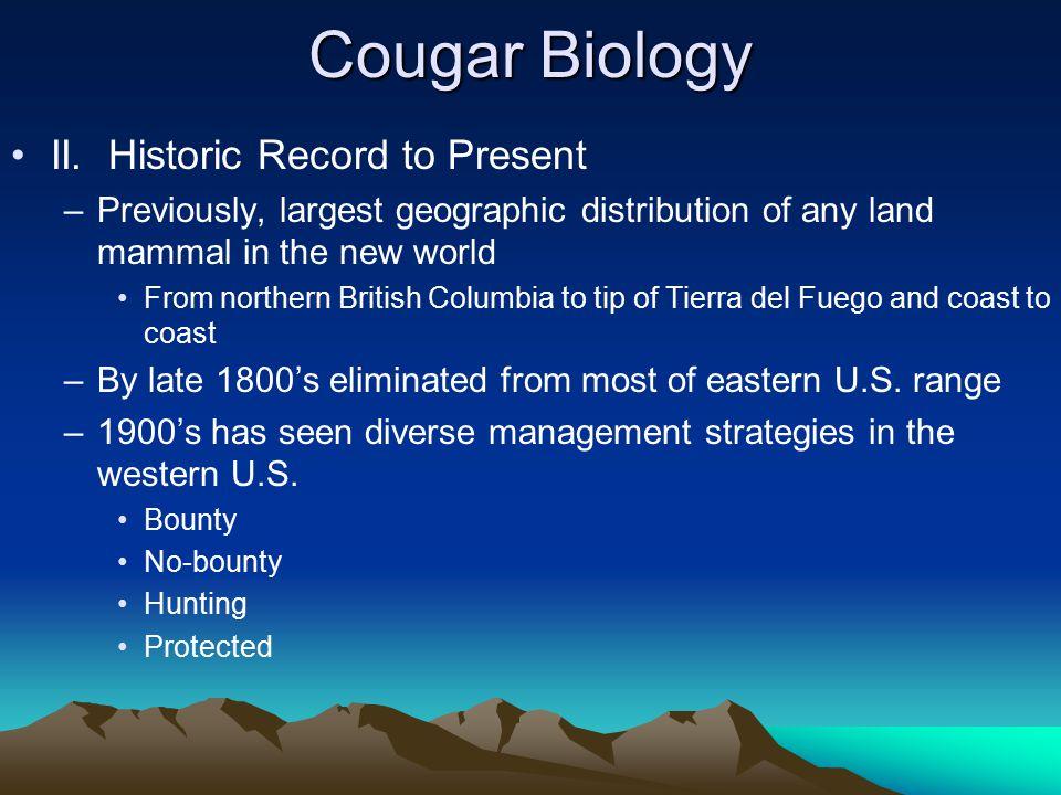 Cougar Biology II.