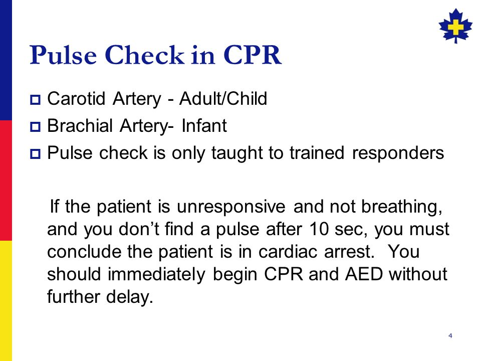 4 Pulse Check in CPR  Carotid Artery - Adult/Child  Brachial Artery- Infant  Pulse check is only taught to trained responders If the patient is unresponsive and not breathing, and you don't find a pulse after 10 sec, you must conclude the patient is in cardiac arrest.